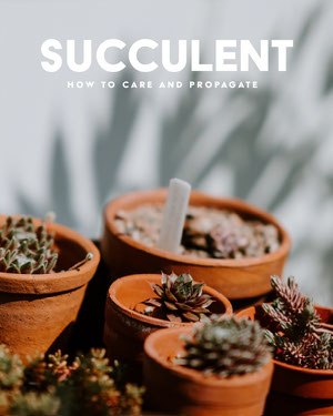 succulent care tip instagram portrait 50 Modern Fonts