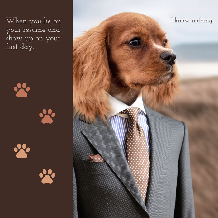 I know nothing Dog Memes