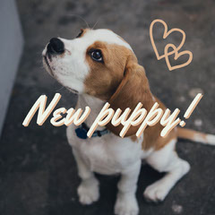 Brown New Puppy Square Instagram Graphic Heart