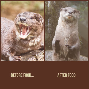 Otter and Food Instagram Square Meme Meme per i tuoi social network