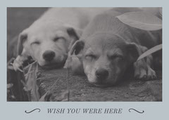 Grey and Blue, Light Toned Miss You Card Dog Flyer