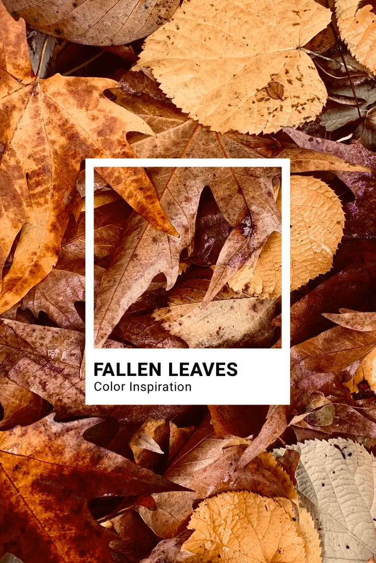 Brown Autumn Leaves Color Inspiration Pinterest Graphic Fallen Leaves Color Inspiration