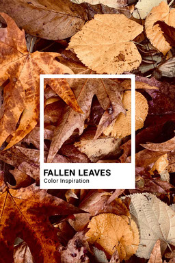 Brown Autumn Leaves Color Inspiration Pinterest Graphic