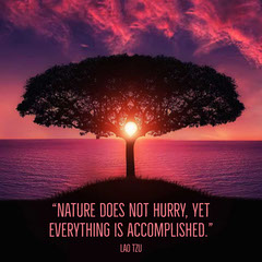 """Nature does not hurry, yet everything is accomplished."" Positive Thought"