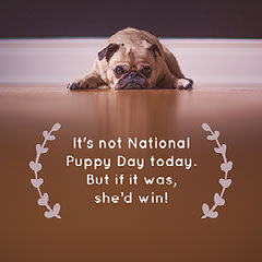 Brown and Beige National Puppy Day Meme Instagram Post Pets