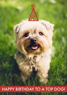 Happy birthday to a top dog! Geburtstagskarte
