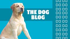 Blue & White Dog Blog Banner  Animal