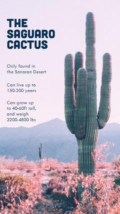 Saguaro Cactus Infographic Instagram Story Desert