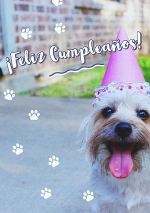 dog and paws birthday cards  Tarjeta de cumpleaños con citas
