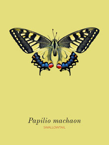 Yellow Swallowtail Butterfly Infographic Infographic