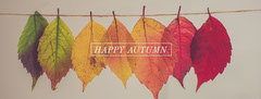 Warm Earthy Tones Autumn Facebook Profile Cover with Leaves Fall