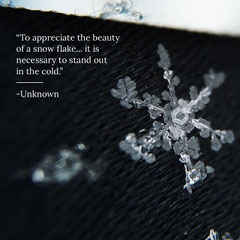 Winter Quote Snowflake igsquare Beauty