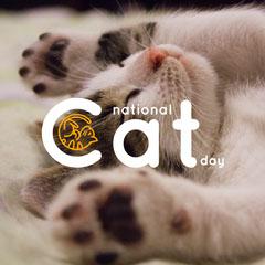 Light Toned Cute Cat Day Instagram Post Cat
