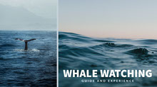 Blue Toned Wale Watching Event Ad Facebook Banner Portada de Facebook