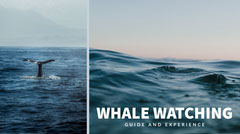 Blue Toned Wale Watching Event Ad Facebook Banner Event Banner
