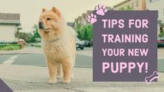 Purple Dog Training Tips Youtube Thumbnail Pets