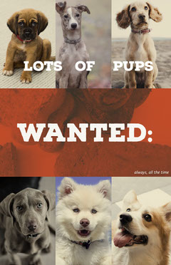 Puppies Wanted Flyer with Collage Dog Flyer