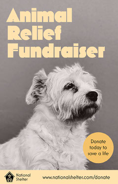 Yellow Animal Relief Fundraiser Poster Animal