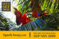 Travel Agency Ad with Parrots and Palm Trees Travel Agency