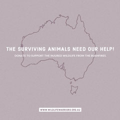 bushfires in Australia donation Instagram post Animal