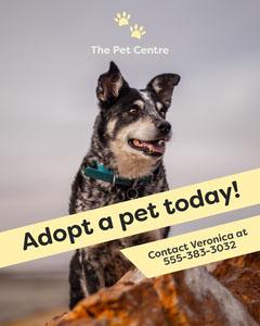 Yellow Dog Photo Animal Shelter Pet Adoption Instagram Portrait  Animal