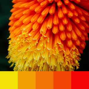 Color Palettes | Duotone & Monochromatic 2 101 Brilliant Color Combos