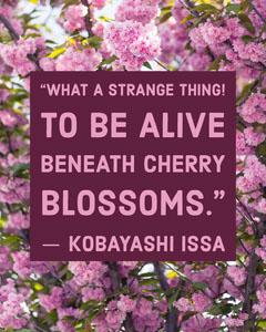 Cherry Blossoms Quote Instagram Portrait  Flowers