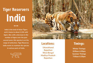 Orange India Travel Brochure with Tiger Brochure