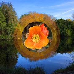 Light Toned Flower Composite in Landscape, Instagram Post Lake