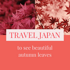 Pink and White Travel Japan Instagram Graphic Japan