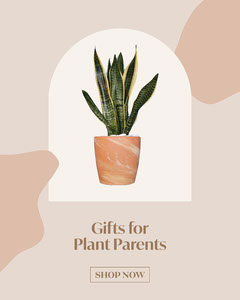 Beige Minimalist Plant Parent Gift Guide Collage Plants