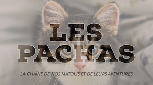 Beige and White Cat Youtube Channel Banner Illustration de chaîne YouTube