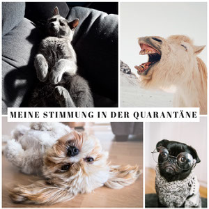 Meine Stimmung in der Quarantäne Meme