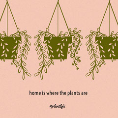 Pink and Green Illustrated Houseplant Instagram Post Plants