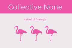 Collective None Kids