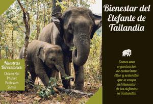 Thailand elephant sanitary travel brochures  Folleto