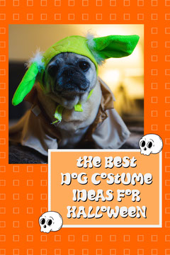 Orange Dog Halloween Costume Ideas Pinterest Dress