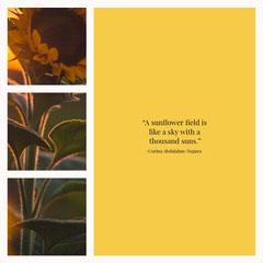 sunflower quote sun igsquare Sun