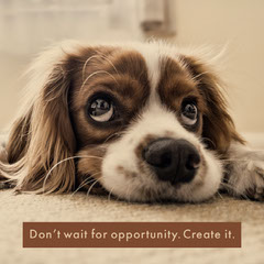 Brown With Dog Portrait Sentence Instagram Graphic Pets
