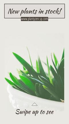 Plant Stock Instagram Story Plants