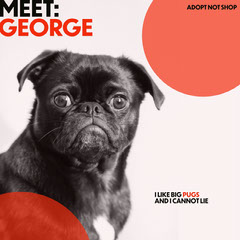 Orange Pet Adoption Instagram Square Graphic with Pug Dog Adoption Flyer