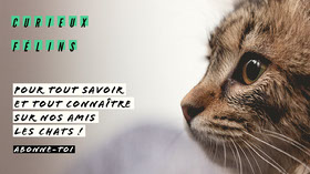 Neutral beige cat profile Youtube channel art Bannière YouTube