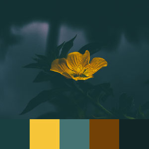 Color Palettes | Moody 1 101 Brilliant Color Combos
