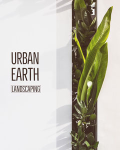 White With Green Plant Urban Earth Social Post Earth