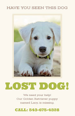 Green and White Lost Dog Flyer Dog Flyer