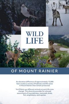 Light Toned Wild Life of Mount Rainier Information Pinterest Animal