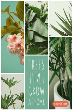 Green Houseplant Pinterest Graphic with Collage Plants