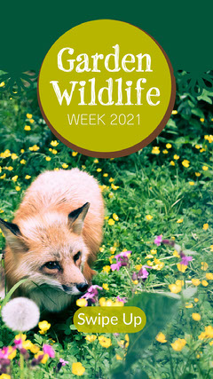 Green Wildlife Fox In Garden Instagram Story Garden