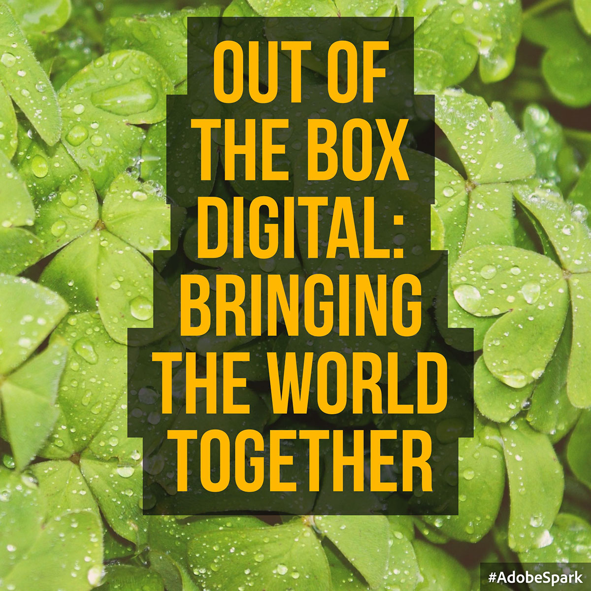 Out of the Box Digital: Bringing the World Together