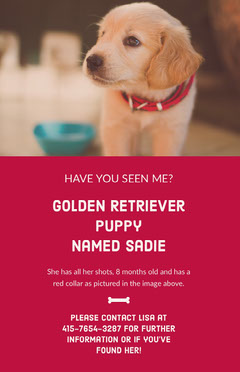 Golden Retriever Puppy <BR>named Sadie Dog